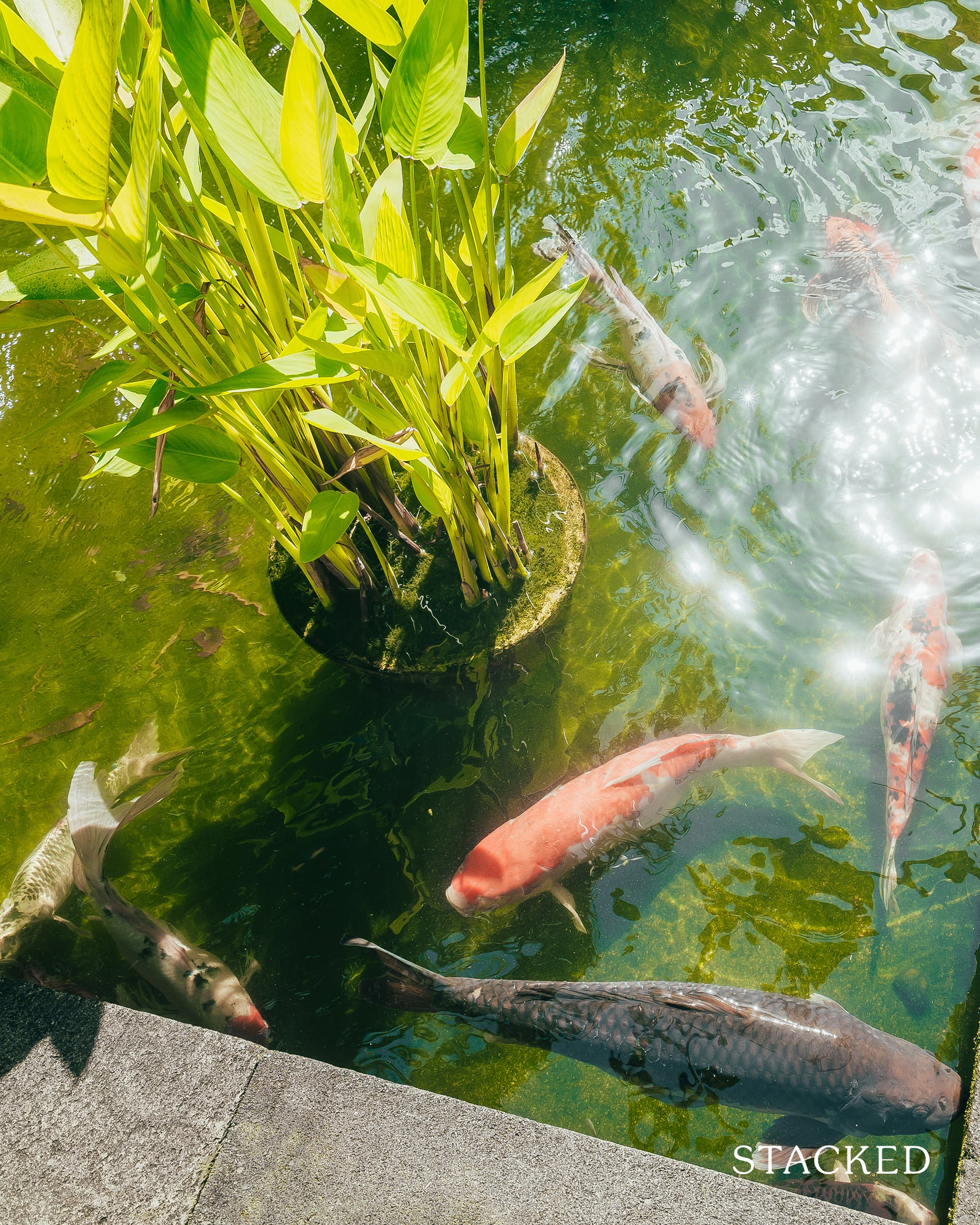 the cornwall koi pond